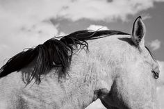 Black and White Modern Horse Photograph Equine by ApplesAndOats