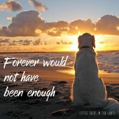 Teddie xxxxx always in my heart. Miss you forever xxxxxx I Love Dogs, Puppy Love, Diy Pet, Animals And Pets, Cute Animals, Pet Loss Grief, Dog Rules, Rainbow Bridge, Losing A Pet