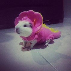 Dinosaur Costume for guinea pig
