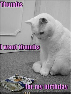 Aw, poor kitty!  Mine just meow for theirs.  All I have to do is shake the bag and they come running no matter where in the house they are!
