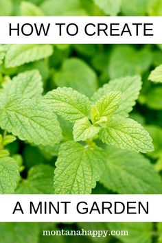 How to Create a Mint Garden will give you all the tips and tricks on adding this amazing herb to your garden. Gardening is easy if you know the ins and outs of each plant. Growing Mint, Growing Herbs, Growing Vegetables, Gardening Vegetables, Mint Garden, Edible Garden, Vegetable Garden, Mint Plant Uses, Mint Plants