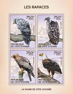 Hawks, kites and eagles