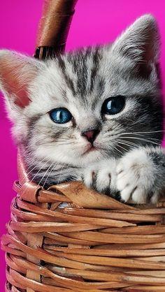 cute kitten ひょこっ