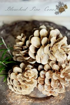 Bleached Pine Cones - what a cool idea!