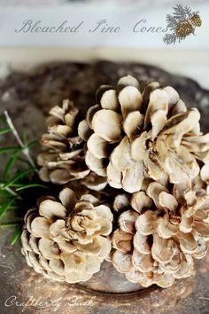 Craftberry Bush: Bleached Pine Cones