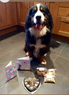 =This is the original Murdock Cake= A year ago we made a cake for this absolutely gorgeous boy, which was the first ever cake to leave the Faerytails barkery. He turned 4 yesterday and celebrated with another Faerytails cake. Happy birthday to the handsome Murdock!! :) <3