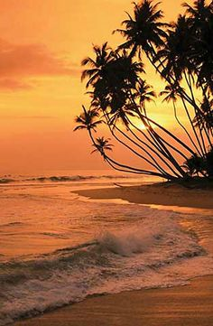 Dalawella Beach Resort in, Sri Lanka. Beautiful Sunset, Beautiful Beaches, Beautiful World, Sri Lanka, Places To Travel, Places To See, Destinations, Ocean Beach, Science Nature