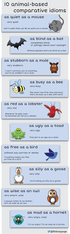 10 animal-based comparative idioms in English English Language Learners, English Vocabulary Words, English Phrases, Learn English Words, English Grammar, Teaching English, English Fun, English Study, English Lessons