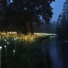 "In early June, PA First Tourist visited Longwood Gardens' opening of ""Light, Installations by Bruce Monro,"" inviting guests to view beautifully illuminated gardens with large-scale, site-specific light installations by Bruce Munro, British artist and light designer, never before seen in the United States."