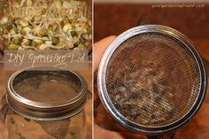 DIY Sprouting Lid - Here's an incredibly easy-to-make sprouting lid for sprouting mung beans or other sproutables.