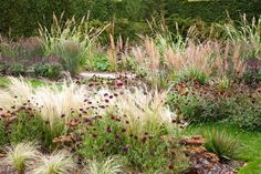 Plantsman's Garden (Simple Prairie)- Etchingham East Sussex UK - Jo Thompson. Stipa tenuissima, Calamagrostis brachytricha and Panicum virgatum 'Heavy Metal', interplanted with perennials such as Salvia 'Caradonna' and Geum 'Princes Irene'. (+Scabiosa atropurpurea 'Ace of Spades'? and Sedum Xenox Yellow??)