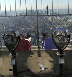 """Cat Print: Cats At The Empire State Building 