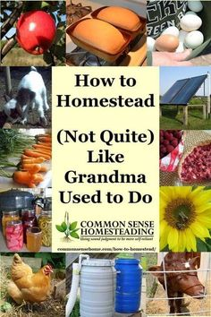 You don't have to move off grid to learn how to homestead. Just take a lesson from grandma and work to provide for your family with the best of old and new. I laughed at the title since I'm much more of a homesteader than my grandma. Off Grid Homestead, Homestead Farm, Homestead Gardens, Homestead Living, Farms Living, Homestead Survival, Survival Prepping, Survival Skills, Emergency Preparedness