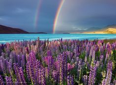 all the colours by Daniel Murray on 500px