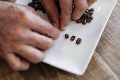Portugal, un destino para amantes del buen café - via EfeTur 29.04.2015   Precio, variedad y cuidada preparación convierten al café servido en Portugal en uno de los productos más atractivos, y menos conocidos, de su gastronomía, a la altura del famoso bacalao y el tradicional pastel de nata de Belém. Foto: Granos de café. EFE/Kena Betancur