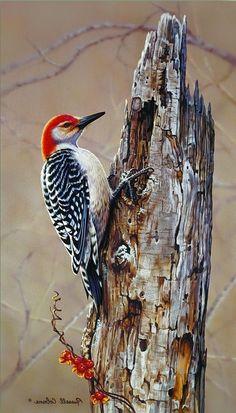 Bird Drawings, Animal Drawings, Drawing Birds, Wildlife Paintings, Wildlife Art, Pretty Birds, Beautiful Birds, Rajasthani Painting, Hyper Realistic Paintings