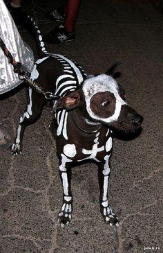 Awesome dog Halloween costume!