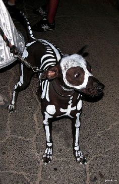Awesome dog Halloween costume!