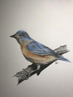 #цветные карандаши # птица#рисование карандашом # Faber castell