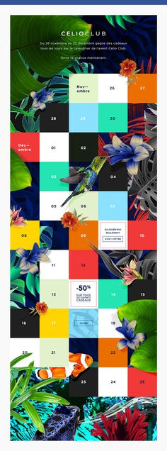 celioclub facebook tropical perroquet website graphisme