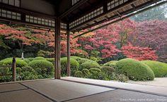 Les secrets des jardins japonais. Les buissons ronds de Shisen-dō. Les buissons ronds d'azalées taillées, qui symbolisent une mer de nuages flottant au dessus des collines d'un paysage. #jardin #japonais #azalee