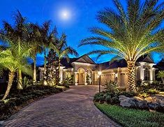 Landscaping at its finest palm tree in the front yard for Florida landscape design