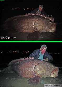 Photoshop Submission for 'Hoaxes' Contest Jeremy Wade, Usa Fishing, Fishing World, Gone Fishing, River Monsters, Sea Monsters, Wild Creatures, Ocean Creatures, Scary Ocean