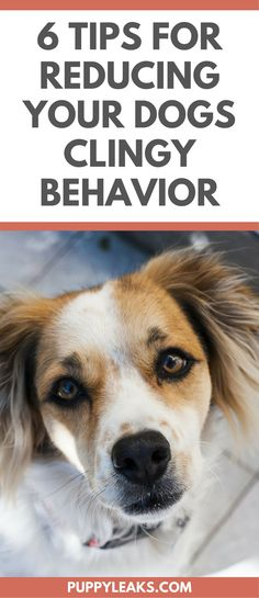 6 Ways to Reduce Clingy Behavior in Dogs