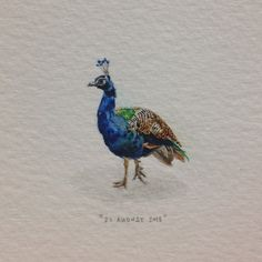 Day 239 : Timid peacock. 20 x 26 mm. #365paintingsforants #watercolor #miniature #peacock #timid