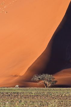 The magic scenery of the dunes in Sossusvlei (Namibia) at sunrise.