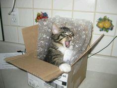 Surprise kitty!