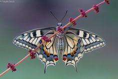 papillons-photo-macro-beaute-2