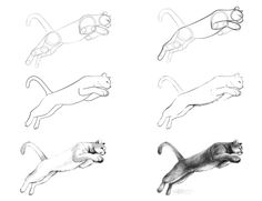 mountain lion drawings