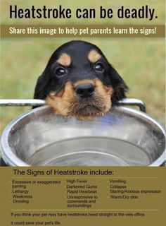KNOW THE SIGNS OF HEATSTROKE IN YOUE PET youe pet