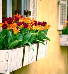 Plant this: 9 ways to liven up your windows Go bold with plants that are known for their color. Smith recommends filling your window box with tulips in spring, dahlias in summer and chrysanthemums in fall.