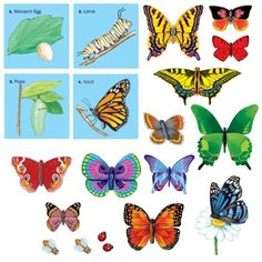Butterflies w/life cycle - PRE-CUT Flannelboard Figures *** You can find out more details at the link of the image.