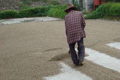 Afbeeldingsresultaat voor koffieplant kopen belgie
