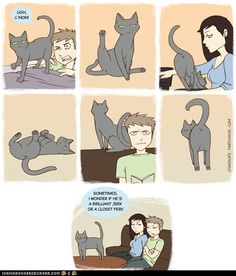 Why I no longer have a cat.