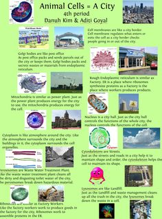 Cell City Project | Science Instruction | Pinterest