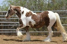 Rare colored horses! POST AWAY!! | Page 390 | My Horse Forum
