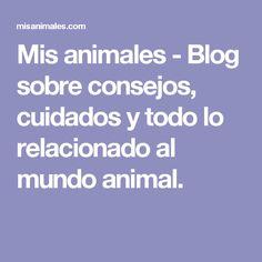 Mis animales - Blog sobre consejos, cuidados y todo lo relacionado al mundo animal. Blog, Doggies, World, Journals, Tips, Animals, Pets, Dogs, Hacks