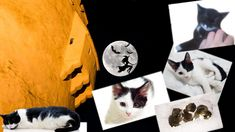 This Halloween, please  BE KIND to animals !