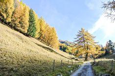 19 schöne und leichte Herbstwanderungen Schweiz - Wandern im Herbst Country Roads, Nature, Travelling, Hiking Trails, Mountains, Destinations, Viajes, House, Nice Asses