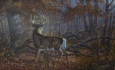 Bowhunting - Where can I find a certain whitetail deer painting? - I know this is a little off of deer hunting, but in a way it is. Wildlife Paintings, Wildlife Art, Animal Paintings, Deer Paintings, Whitetail Deer Pictures, Deer Photos, Deer Pics, Whitetail Deer Hunting, Whitetail Bucks