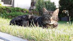 """""""My"""" lovely Cat 😍"""
