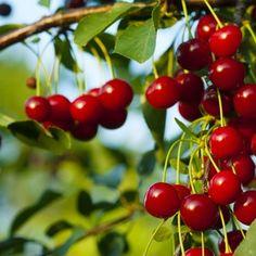 Drinking, Cherry, Fruit, Food, Lemon, Syrup, Beverage, Drink, Essen