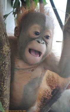 Jemmi to be Budi's Buddy? | International Animal Rescue