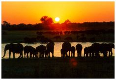 Hwange National Park    Zimbabwe.  Been there!
