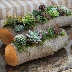 Succulent Planter Diy, Succulent Gardening, Container Gardening, Log Planter, Vegetable Gardening, Indoor Succulent Garden, Organic Gardening, Mini Cactus Garden, Succulent Tree