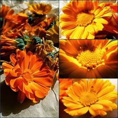 Calendula, Beauty Bar, Pedi, Health And Beauty, Painting, Relax, Marigold Flower, Flowers, Painting Art